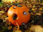 http://1.bp.blogspot.com/_TvO3kzFc2O4/SXyrXoZ8WAI/AAAAAAAAAKQ/sG1YXsI1N0Y/s320/rat+pumpkin.jpg