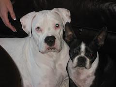 Bailey & Bella