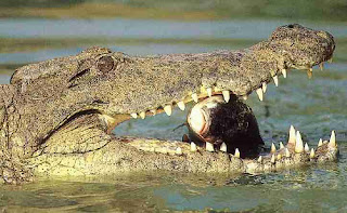 Crocodile eating man alive - photo#24
