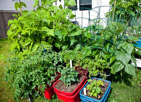 Alberta zone 3 gardening blog self watering containers for Soil zones of alberta