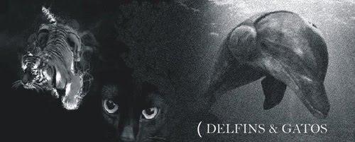 Delfins e Gatos II