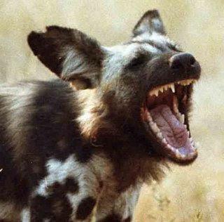 laughing_hyena_mouth.jpg