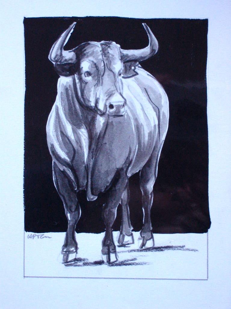 C a p t o n dessins de toros - Dessin de toro ...