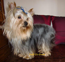 Titto (Yorkshire Terrier)