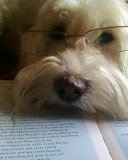 Saby likes to read!
