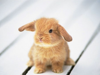 cute pictures of bunnies. Really Cute Bunnies