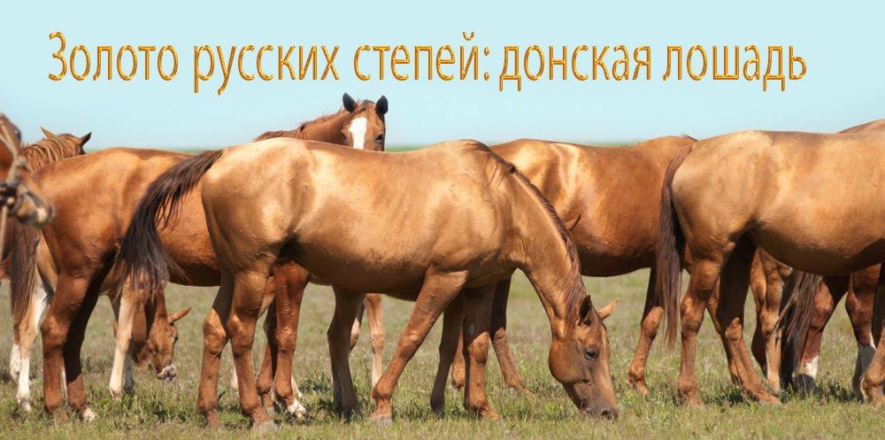 Золото русских степей: донская лошадь
