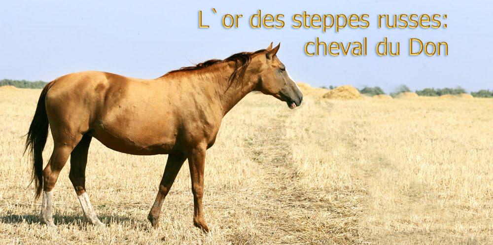 L`or des steppes russes: cheval du Don