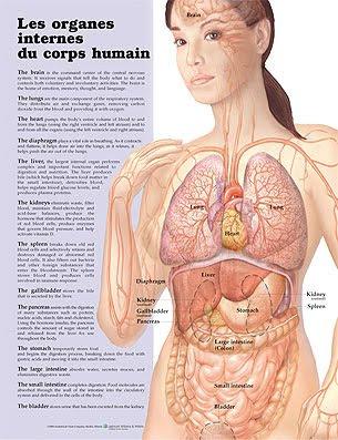 Anatomie Corps Humain Femme um olhar sobre a cultura francesa: planche les organes internes du