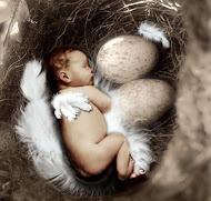 Meu ninho, meu cerne