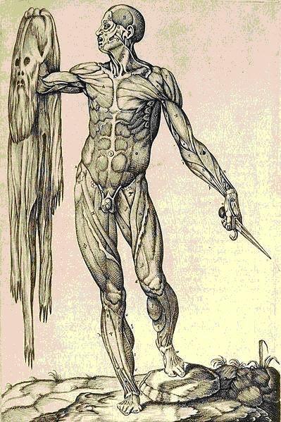 Mayor Artefacto: Anatomía Humana