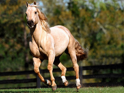 Horses Free Desktop Wallpaper