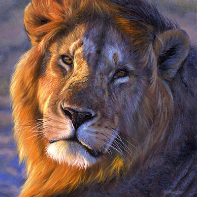 African Lions Pictures and