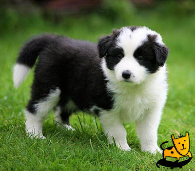 Lovely Cute Black mix White Puppy Dog Wallpaper