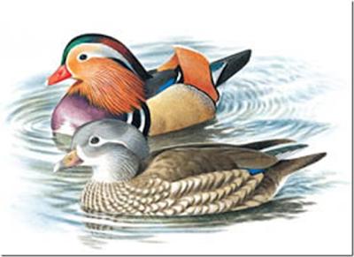Beautiful Male Female Birds Wallpaper