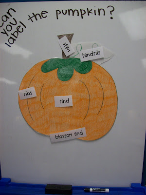 physical properties of pumpkin seeds pdf