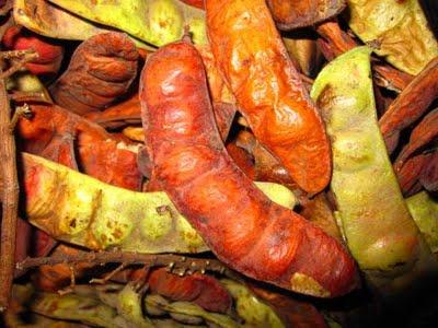 Proyectos adviento - Caesalpinia gilliesii cultivo ...