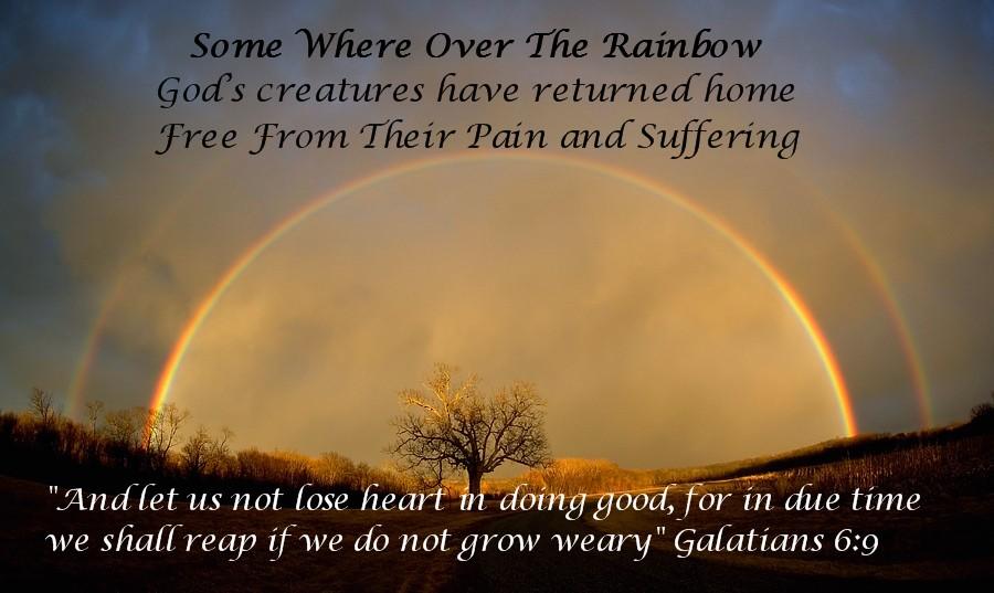 [Rainbow+for+Wally.jpg]