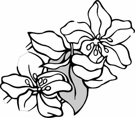 Flower Coloring Pages on Coloring Pages  Spring Flower Coloring Pages Collections 2010