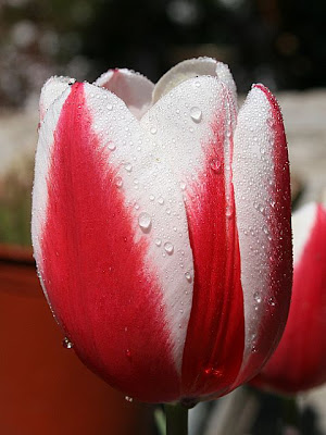 Names of flowers each flower has a different meaning for me tulip have a very deep meaning stick with a handle that symbolizes long life in the nature of independence mightylinksfo