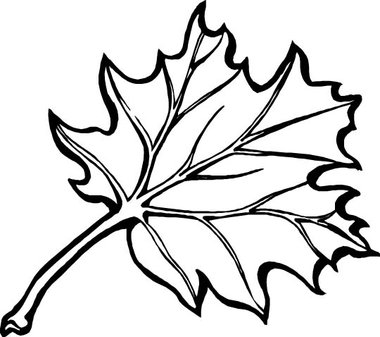 Oak Leaf Coloring Page
