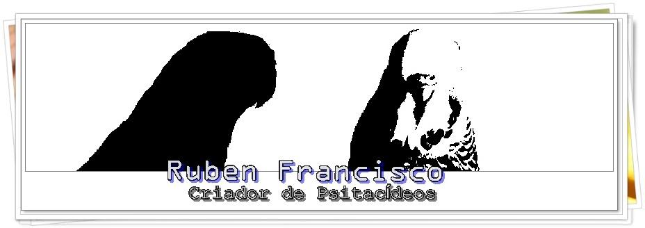 RUBEN FRANCISCO - Criador de Psitacídeos