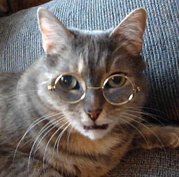 ¡HOLA! (2) - Página 4 Cat-CatWearingGlasses