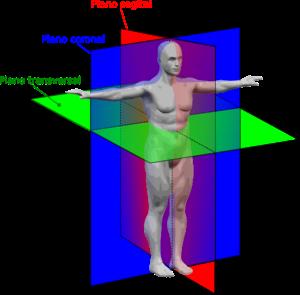 external image 300px-Human_anatomy_planes-EScor.png
