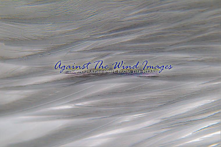 Against The Wind Images' Portfolio