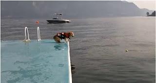Un perro saltando al agua muy gracioso