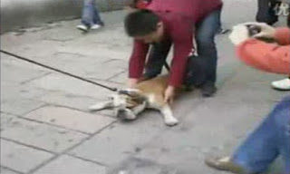 Un perro muy perezoso