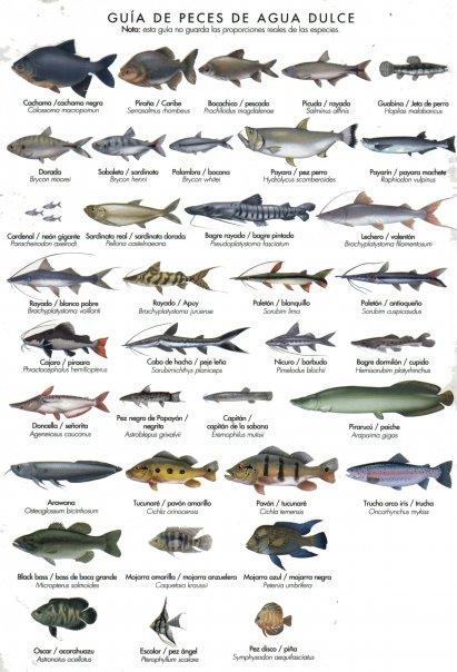 pesca deportiva pavon rio bito colombia