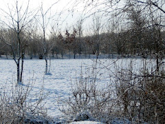 Winter in Spring