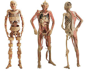 fotos do corpo humano
