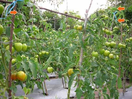 B 252 cher verkaufen die besten 5 von gambar hasil pertanian may 2016