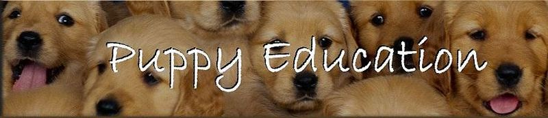 Puppy Education Blog