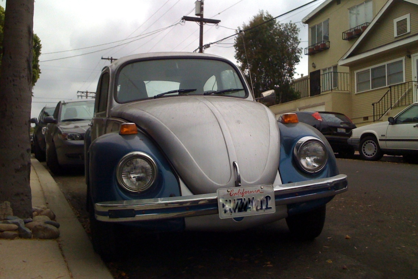 vw rat bug