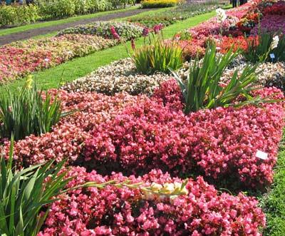 Энциклопедия садовых цветов