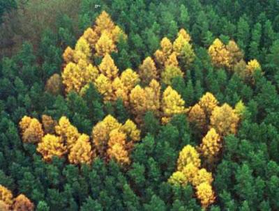 Картинки леса, фото леса, сосновый лес, посадка леса, хвойные леса, леса земли, фотографии леса