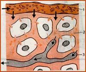 долгожитель, питание долгожителей, секреты долгожителей