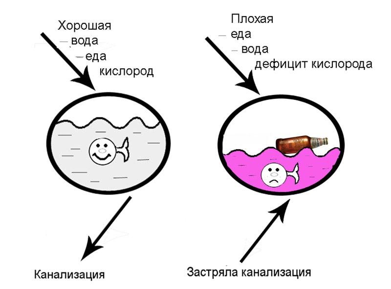 как выгнать паразитов из организма