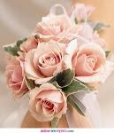FLORES-----Rosas....rosa