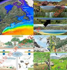 Galeria: ecosistemas