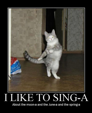 funny cats pictures with captions. Very funny cat pictures funny
