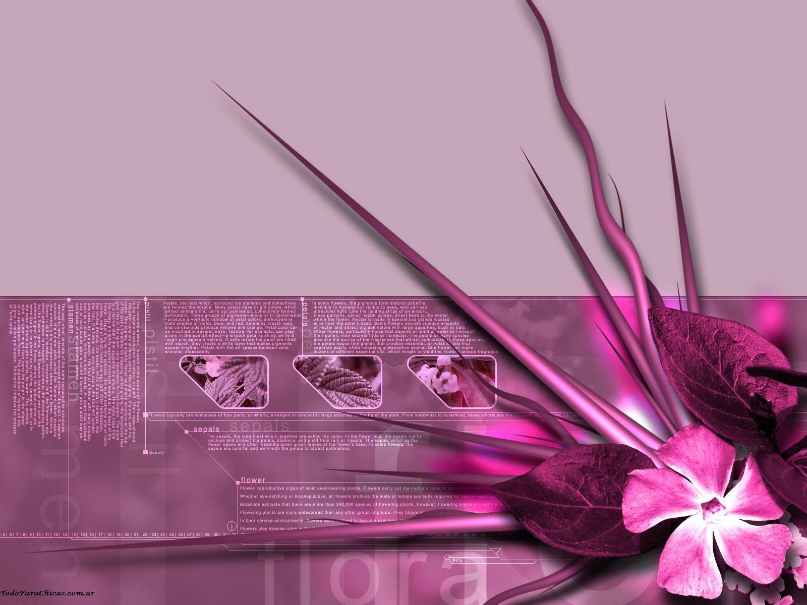 http://1.bp.blogspot.com/_UMxHrJN54AM/TGbvl1EBJDI/AAAAAAAAAdo/VDU_a4qXSzE/s1600/wallpaper+2.JPG