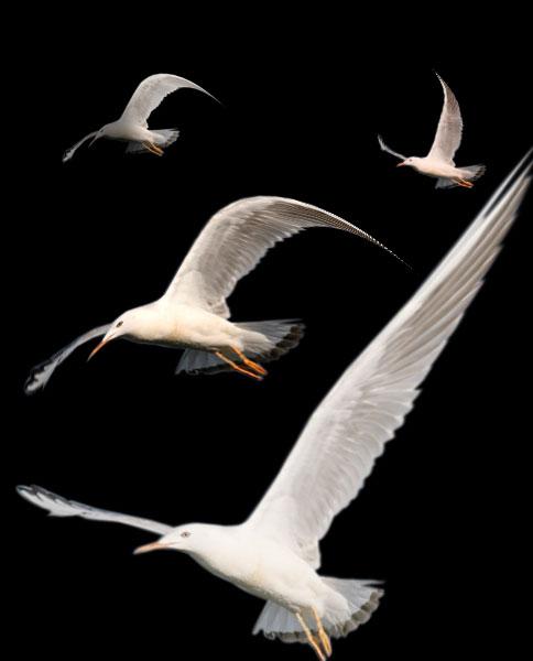 La libertad y el progreso son el objeto, tanto del arte, como de la vida en general.