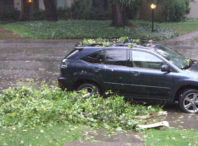 fallen branches near my car