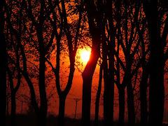 Puesta del sol entre los Arboles
