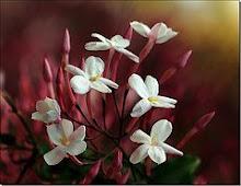 Noviembre con aromas a tardios jazmines...
