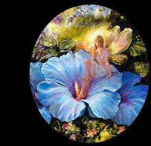 Petalos azules alas magicas.... sueños de hadas....